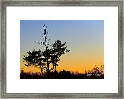 Framed Print featuring the photograph Out On A Limb by Davandra Cribbie