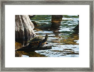 Out On A Limb Framed Print by Frank Feliciano