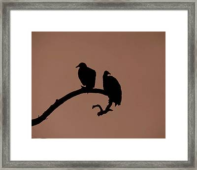 Out On A Limb Framed Print by Peg Urban