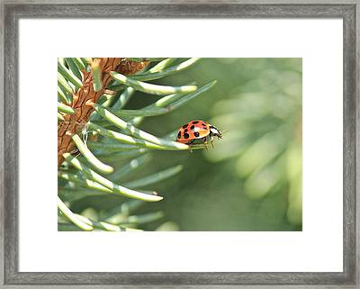 Framed Print featuring the photograph Out On A Limb by Penny Meyers