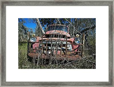 Framed Print featuring the photograph Out To Pasture by Cheri Randolph