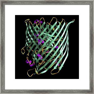 Outer Membrane Receptor Protein Molecule Framed Print