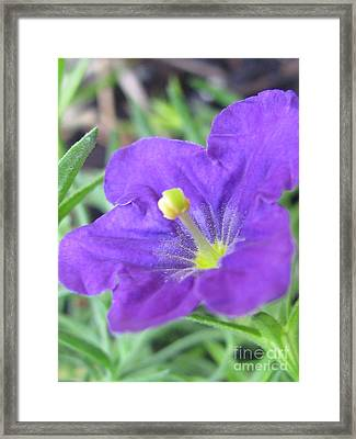 Framed Print featuring the photograph Outstanding Photography by Tina Marie