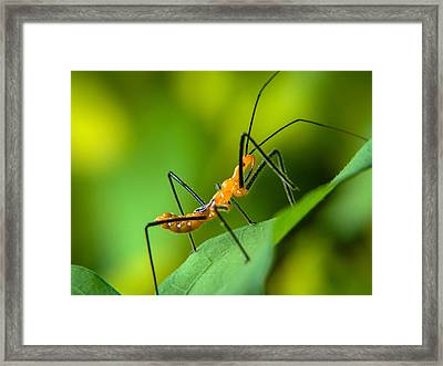 Over And Under Framed Print by Stacy Michelle Smith