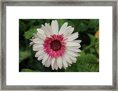 Framed Print featuring the photograph Over The Love Of You by Bob Whitt