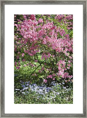 Overgrown Natural Beauty Framed Print by Teresa Mucha