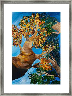 Overhead Framed Print by Dani Altieri Marinucci