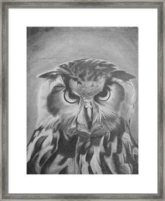 Owl Framed Print by Chris Finster