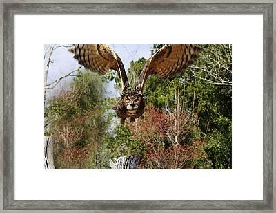 Owl In Flight Framed Print by Paulette Thomas