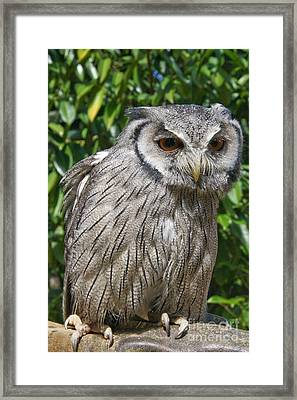 Owl Framed Print by Jo