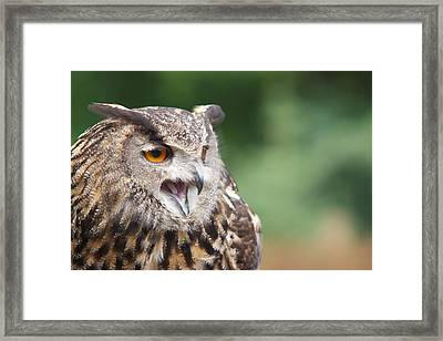 Framed Print featuring the photograph Owl by Josef Pittner
