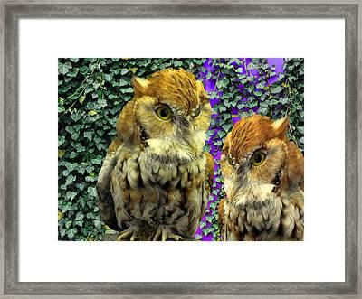Owl Look Framed Print by Lynda Lehmann