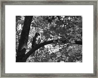 Owl N The Park Framed Print