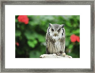 Owl With Blurred Background Framed Print by Copyrights(c) All rights reserved by Haruhisa Yamaguchi