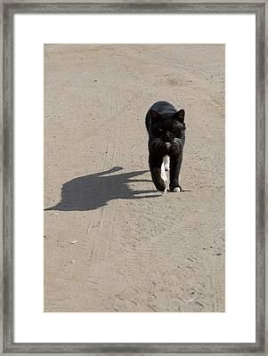 Owner Framed Print