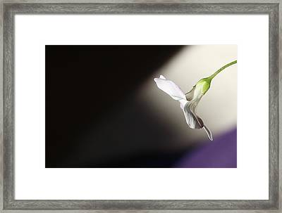 Framed Print featuring the photograph Oxalis Bloom by Kume Bryant