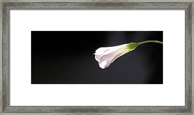Framed Print featuring the photograph Oxalis Bud by Kume Bryant
