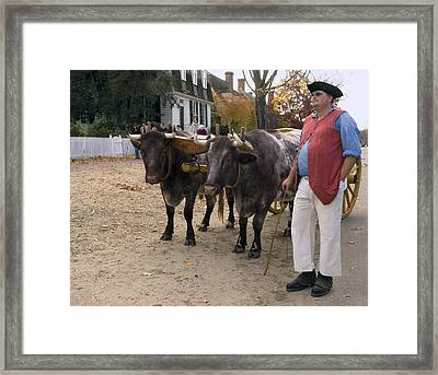 Oxen And Handler Framed Print by Sally Weigand