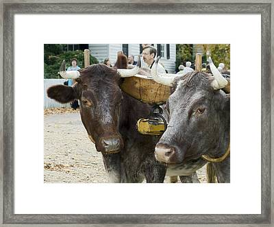 Oxen Pair Framed Print by Sally Weigand
