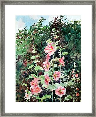 Oxenden Hollyhock Framed Print by Peter Sit