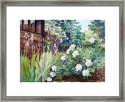 Oxenden Peonies Framed Print by Peter Sit