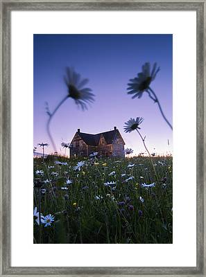 Oxeye Daisies And Abandoned House Framed Print
