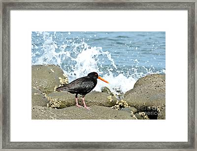 Oyster Eater Framed Print by Yurix Sardinelly