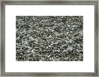 Oyster Piles In Oysterville Framed Print