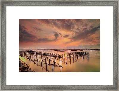 Oyster Racks Framed Print by Taiwan Nans0410