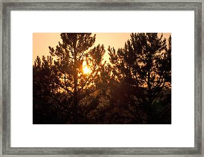 Ozark Gold Framed Print