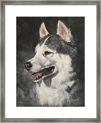 Ozzie Framed Print by Jack Skinner