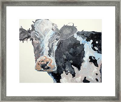 Pa Cow Study 2 Framed Print by Quinton Chapman