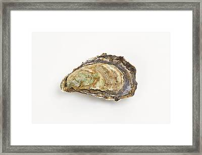 Pacific Oyster Framed Print by David Nunuk