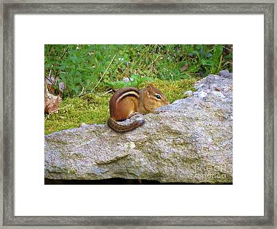 Packin Cheeks Framed Print by Art Dingo