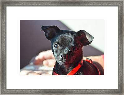Paco The Chug Framed Print