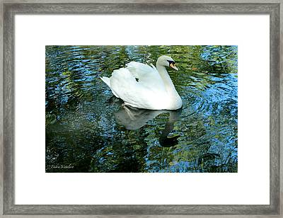 Paddle Framed Print by Debra     Vatalaro