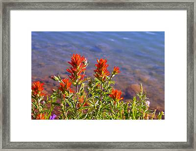 Paintbrush At Water's Edge Framed Print