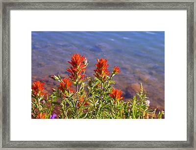 Paintbrush At Water's Edge Framed Print