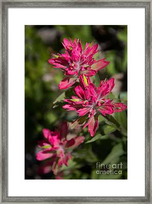 Framed Print featuring the photograph Paintbrush Trio by Katie LaSalle-Lowery