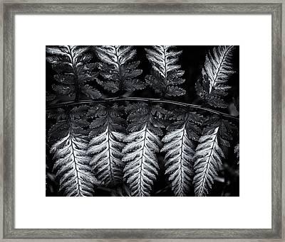 Painted Fern Framed Print