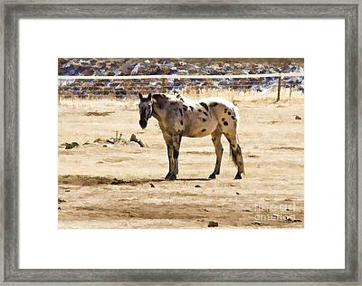 Painted Horses II Framed Print by Angelique Olin