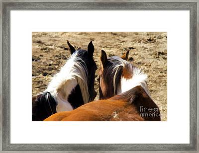 Painted Horses IIi Framed Print by Angelique Olin