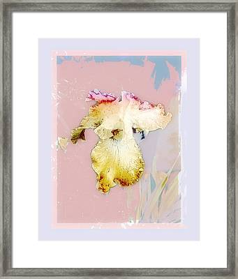 Painted Iris Framed Print
