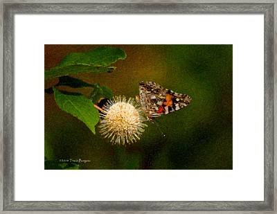 Painted Lady Impasto Framed Print by Travis Burgess