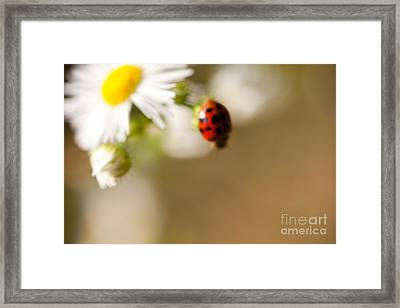 Painted Lady Framed Print by Sue OConnor
