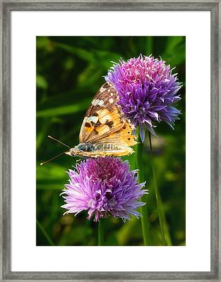 Painted Lady -vanessa Cardu Framed Print by Bill Tiepelman
