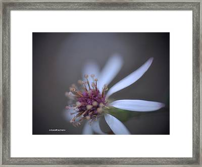 Painted Leaves Framed Print by Sarai Rachel
