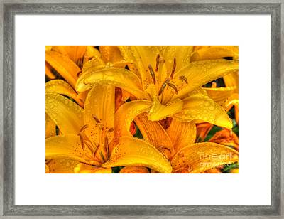 Painted Lily Framed Print by Tap On Photo
