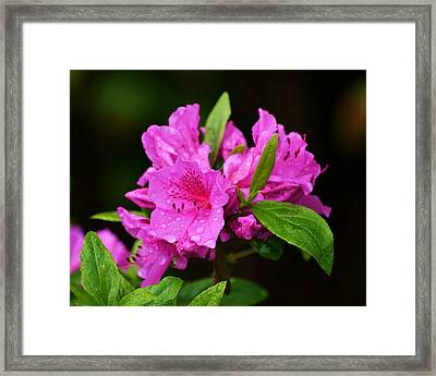 Framed Print featuring the photograph Painted Pink by Mary Zeman