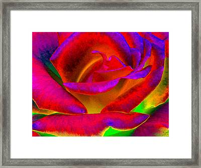 Painted Rose 1 Framed Print by Will Borden
